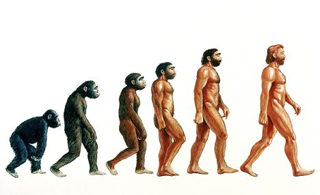 Primate to human Darwin evolution illustration.