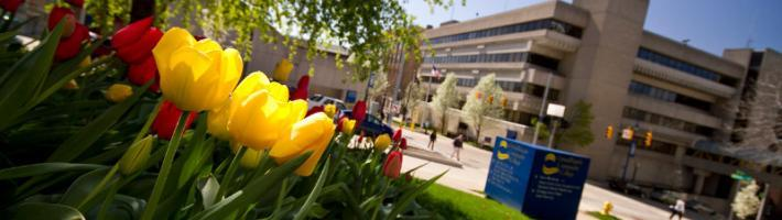 pictures of tulips on campus