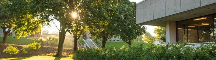 Green space outside the library.