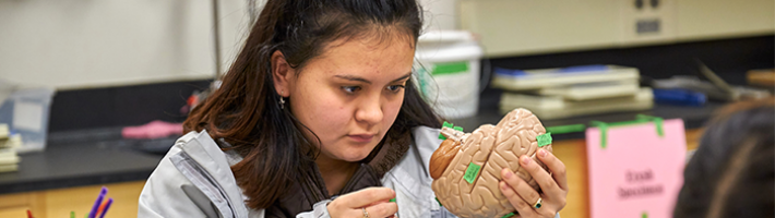 Student labeling a model of the brain.